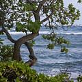 Kauai Shores by Yefim Bam