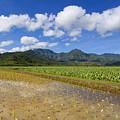 Kauai Wet Taro Farm by Ron Dahlquist - Printscapes