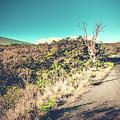 Kaupo Other Road To Hana Sunset Piilani Highway Maui Hawaii by Sharon Mau