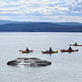 Kayakers Paddle To Fishing Cone On Yellowstone Lake by Catherine Sherman