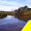 Kayaking Bloody Marsh by Thomas R Fletcher