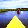 Kayaking Through Bloody Marsh by Thomas R Fletcher