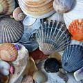 Kayla's Shells by John Schneider