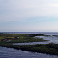 Keaton Beach Wetland by Bob Johnson