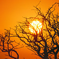 Keawe Tree At Sunset by Allan Seiden - Printscapes