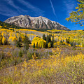 Kebler Pass Gold by Crystal Garner