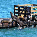 Keep Off The Dock - Sea Lions Can't Read by Anthony Murphy