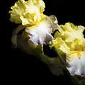 Keep Smiling Iris  by John Trax