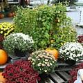 Kelly Garden Mums  Pumpkins And Duck Or Goose by Anne-Elizabeth Whiteway