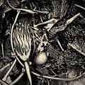 Kelp V Toned by David Gordon