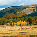 Kenosha Pass Aspens 4 by Robert Meyers-Lussier