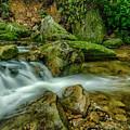 Kens Creek In Cranberry Wilderness by Thomas R Fletcher