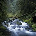 Kentucky Creek by Robert Potts