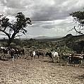 Kenya: Cattle, 1936 by Granger