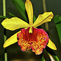 Keowee Newberry Orchid 001 by George Bostian