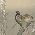kersenbloesem Ohara Koson by Eastern Accent