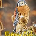 Kestrel Nature Wear by LeeAnn McLaneGoetz McLaneGoetzStudioLLCcom