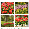 Keukenhof Garden Collage by Jon Berghoff