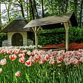 Keukenhof Gardens by Alex Lyons