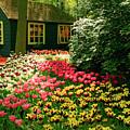 Keukenhof's Tulips by Erin Larcher