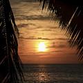 Key West Palm Sunset 2 by Bob Slitzan