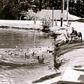Kids N Ducks by Jeff Porter
