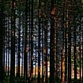 Kielder Forest And Kielder Water by Martyn Arnold