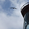 Kilauea Lighthouse And Bird by Nadine Rippelmeyer