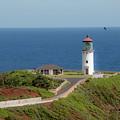 Kilauea Lighthouse by Teresa Wilson