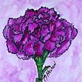 Kimmy's Carnation by Marsha Heiken