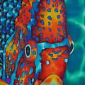 King Angelfish by Daniel Jean-Baptiste