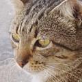 King Cat by Ian  MacDonald