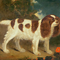 King Charles Spaniel by William Thompson