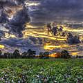 King Cotton Sunset Art Statesboro Georgia by Reid Callaway