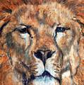 King Lion by Maureen Murphy