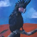 King Of Cockatoos by Caroline Peacock