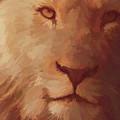 King Of The Jungle by Barbara A Lane