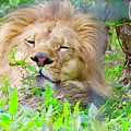 King Of The Jungle  by Kenneth Summers