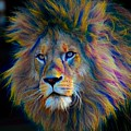 King Of The Jungle by Robert Kinser