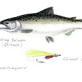 King Salmon Or Chinook With Chinook Candy Fly by Daniel Lindvig