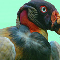 King Vulture II by Emmy Vickers