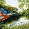 Kingfisher by Bert Mailer