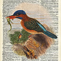 Kingfisher Bird With A Lizard Illustration Over A Old Dictionary by Anna W