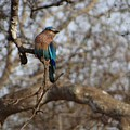 Kingfisher by Khushboo N