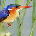 Kingfisher by MS  Fineart Creations