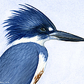 Kingfisher Portrait by Charles Harden
