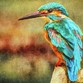 Kingfisher's Perch 2 by Roy Pedersen
