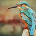 Kingfisher's Perch by Roy Pedersen