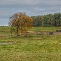 1002 - Kingston Road Cows by Sheryl Sutter