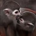 Kiss Me  by Angel Ciesniarska